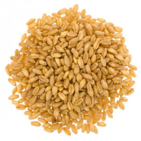Whole Wheat Grain 1kg